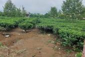 Chính chủ cần bán 1ha đất nghỉ dưỡng tại đập Mai Thành, phường Lộc Tiến, TP Bảo Lộc, Lâm Đồng