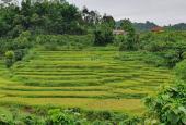 Tôi cần bán gấp 980m2 thổ cư chỉ hơn 300tr nhìn xuống ruộng bậc thang cực đẹp Yên Lập, Cao Phong HB