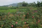 Đất nghỉ dưỡng sẵn nhà cấp 4 cùng khuôn viên, view cánh đồng, bao sổ hồng tại Yên Bình Thạch Thất