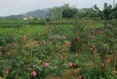 Đất nghỉ dưỡng view cánh đồng, bao sổ hồng tại Yên Bình Thạch Thất sẵn nhà cấp 4