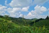 Bán đất giá rẻ Cao Phong Hoà Bình dt 3000m2 full RSX view núi non, khí hậu trong lành, xe vào