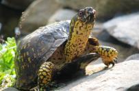 Bày rùa phong thủy hút tiền vào nhà