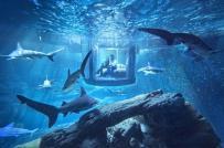 Độc đáo phòng ngủ kính có đàn cá mập bơi quanh