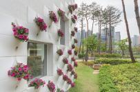 Vườn hoa đặc biệt treo trên tường nhà