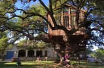 Vì sao ngôi nhà trên cây 450 tuổi, bé như