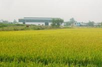 Đồng Tháp chuyển mục đích sử dụng hơn 23 ha đất trồng lúa