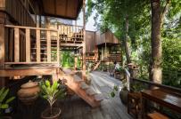 Gia chủ ở Thái Lan chờ vườn thành rừng rồi mới xây nhà