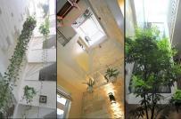 Các kiểu thiết kế giếng trời phổ biến cho nhà phố chật hẹp