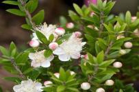 Hãy trồng 5 loại cây cảnh vừa đẹp vừa có tác dụng hút ẩm, diệt nấm mốc này trong nhà