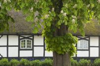 Cách hóa giải cây to trước cửa nhà