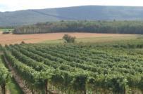 Khiếu nại tới cơ quan nào khi bị bồi thường nhầm loại đất?