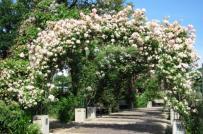 Khu vườn mùa hè ngọt ngào với cổng vòm rực rỡ sắc hoa