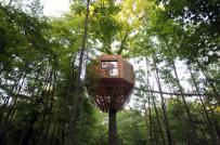Độc đáo ngôi nhà tổ chim trên cây cổ thụ ngót nghét trăm tuổi