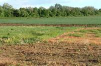 Không cấp Giấy chứng nhận quyền sử dụng đối với đất nông nghiệp sử dụng vào mục đích công ích
