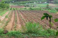 Quy định về điều kiện chuyển mục đích sử dụng từ đất nông nghiệp sang đất ở