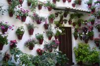 Mặt tiền nhà thêm cuốn hút nhờ cây và hoa