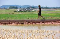 Hà Nội có hàng trăm dự án chậm triển khai