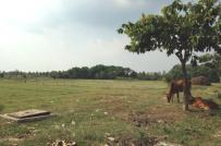 Đất quy hoạch hiện hữu cải tạo là gì? Có rủi ro khi mua loại hình đất này không?