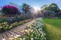Mãi ngắm khu vườn đẹp như