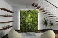 Trồng cây trong nhà và 5 sai lầm cần tránh để không ảnh hưởng đến sức khỏe