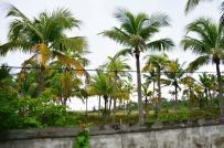 TP. Đà Nẵng kiến nghị thu hồi các dự án chậm triển khai trên địa bàn