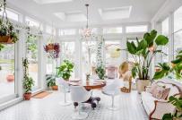 Bí quyết trồng cây xanh trong nhà tươi tốt như ngoài vườn