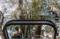 Ngắm ngôi nhà trong suốt lơ lửng trên cây ở Mexico