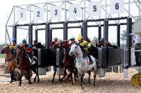 Chính phủ chấp thuận xây dựng trường đua ngựa tại Hà Nội