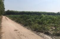 Nhà đất tại Nhơn Trạch có thực sự nóng sốt?