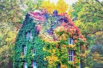 Mãn nhãn những ngôi nhà phủ cây xanh đẹp như cổ tích