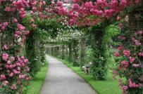 Những ý tưởng thiết kế sân vườn xanh mát tránh nắng nóng