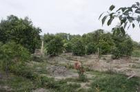 Quy định về hồ sơ, thủ tục chuyển mục đích sử dụng đất trồng cây lâu năm sang đất ở?