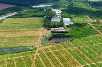 Mô hình đầu tư farmstay với cam kết lãi 50 triệu đồng/năm