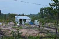 Được xây nhà ở trên đất trồng cây lâu năm hay không?