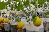 Vườn sân thượng ngập tràn rau quả ở Đồng Nai