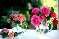 """""""Bỏ túi"""" bí quyết chọn hoa Tết đẹp, ý nghĩa và tiết kiệm"""