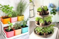 Ý tưởng thiết kế vườn mini trong phòng bếp