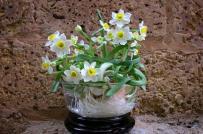 7 loại hoa để bàn làm việc giúp chiêu tài khai vận