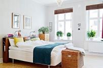 Cây xanh trong phòng ngủ, nên hay không?