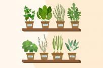 Bắt đầu làm vườn trong nhà với 12 loại rau quả phổ biến này