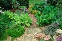 10 loại cây thảo mộc tốt nhất để trồng trong vườn nhà