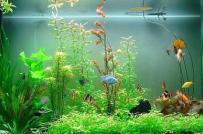 Bể cá cảnh: Vị trí, hướng đặt, số lượng cá theo tuổi và mệnh hợp phong thủy