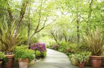 Phong thủy sân vườn là gì? Cách để tạo phong thủy tốt cho vườn nhà?