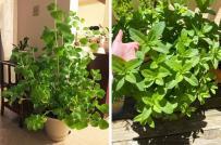10 loại cây hút ẩm tốt nhất, phù hợp đặt trong phòng tắm hoặc bếp
