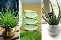 7 loại cây trồng trong nhà có lợi cho sức khỏe
