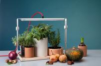 2 bộ sản phẩm trồng cây độc đáo nhà nhỏ và thiếu sáng