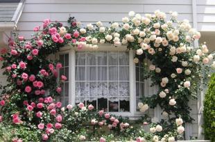 Ngắm những mẫu nhà hoa đẹp tuyệt vời