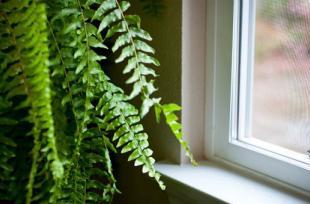 7 bí quyết giúp nhà bạn luôn mát mẻ trong những ngày hè
