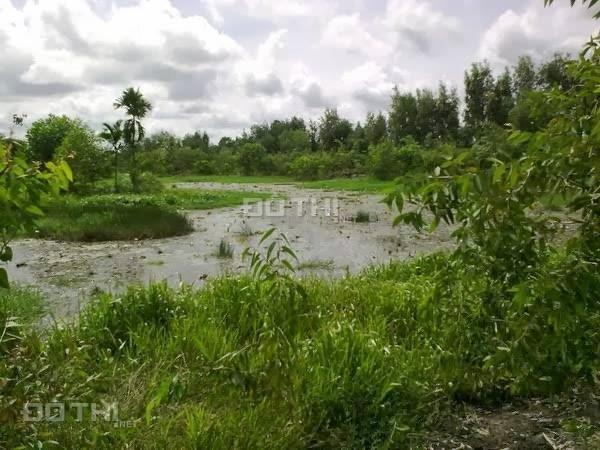 Chính chủ - Bán trang trại sinh thái Củ Chi (9,5 hecta)- TPHCM 7032389