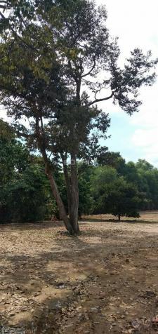 Bán đất thổ cư gần KCN Tam Phước, giá rẻ   12673972